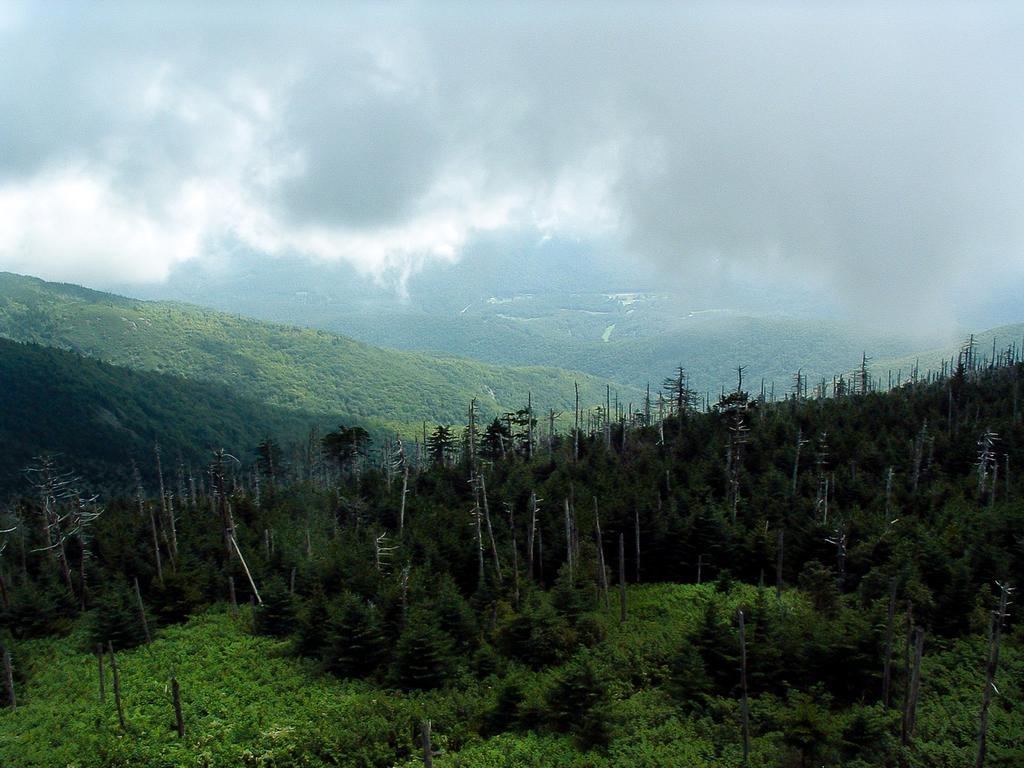 Mount Mitchell Hike