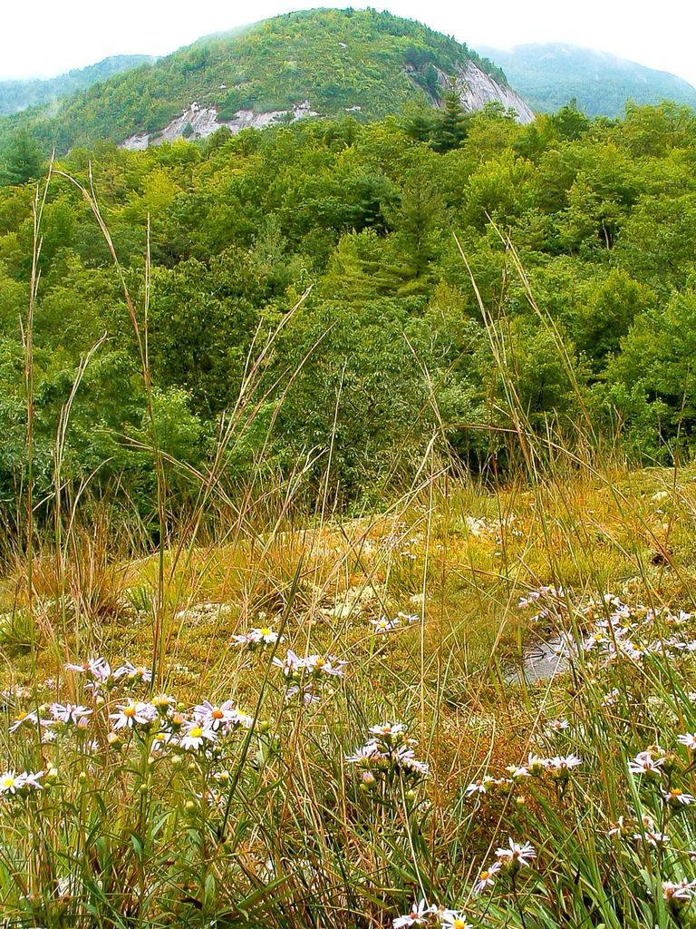 Hiking The Panthertown Valley
