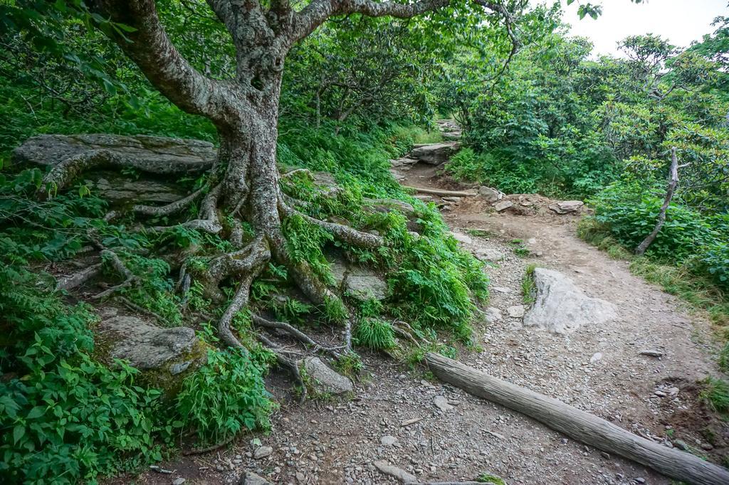 Craggy Pinnacle Hike