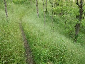 Grassy Trail at Alexander Park