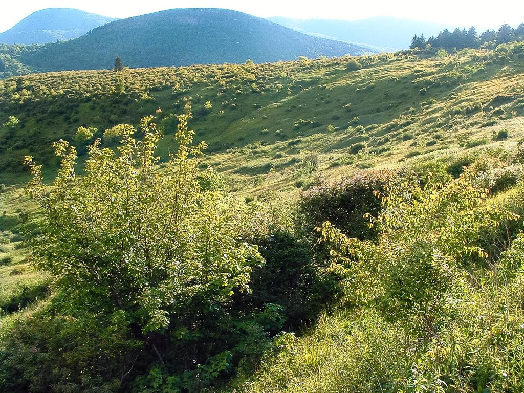 View across the meadows below Black Balsam in the Flat Laurel Creek valley.