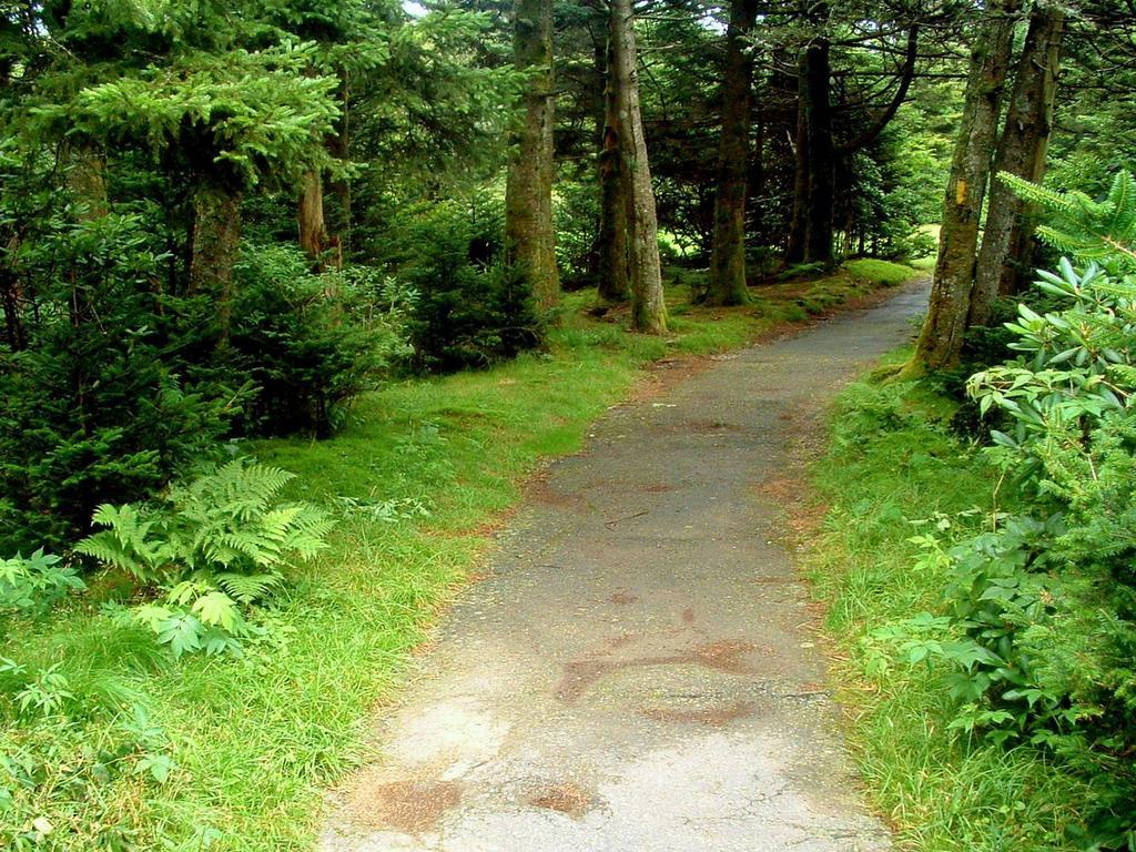Rhododendron Gardens Trail