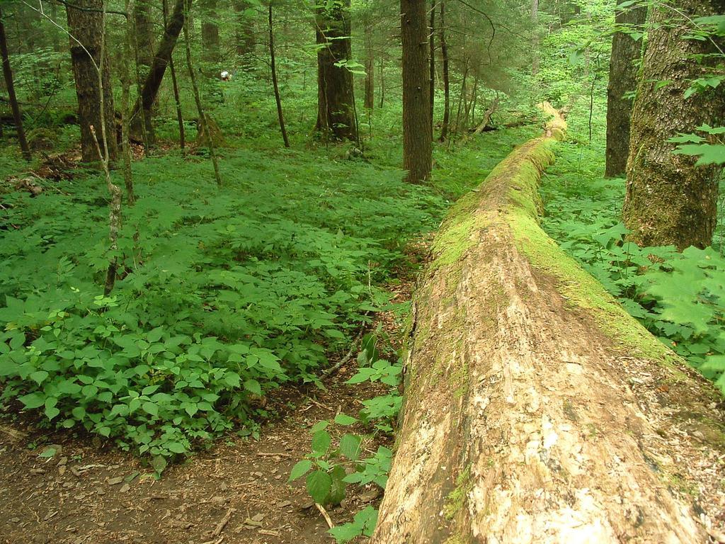 Log Highway