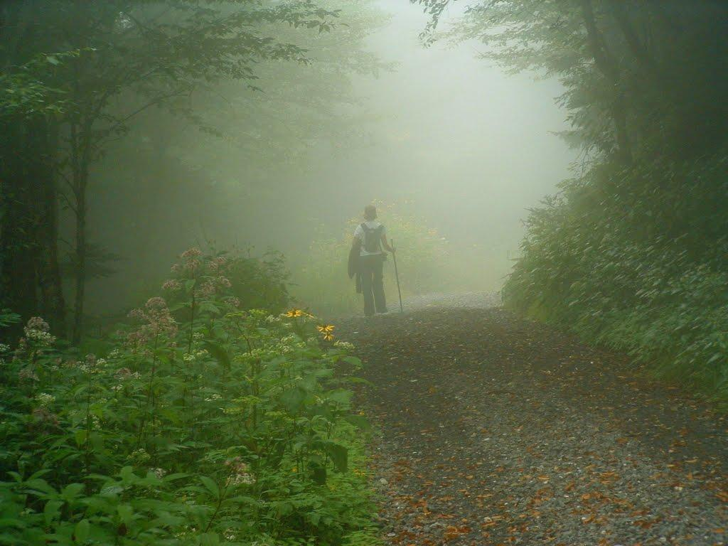 Hiking in the Fog on the Commissary Trail