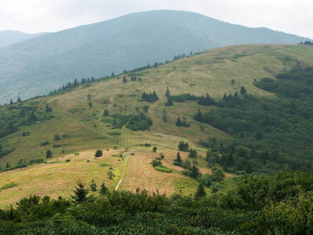 Roan High Knob from Appalachian Trail