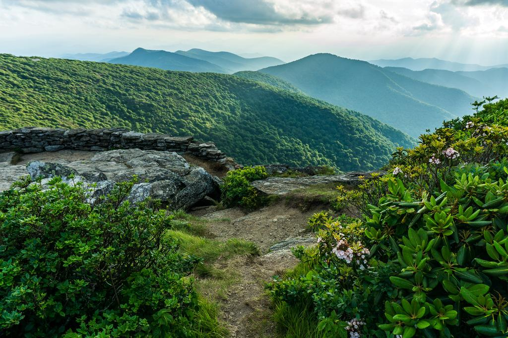 Current inspiration: the view from Craggy Pinnacle's Lower Overlook, with mountain laurel in bloom.