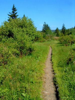 The trail to Black Balsam Knob