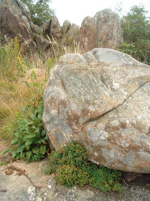 Rocks along the Sam Knob Trail