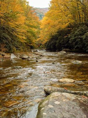 Fall Color on the Big East Fork