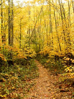 Big East Fork trail in fall color.