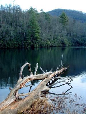 Fallen Tree in Lake Powhatan
