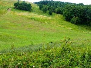 A view up the back slope of Max Patch