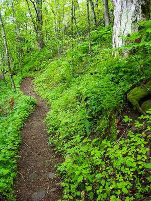 Profile Trail Flowers