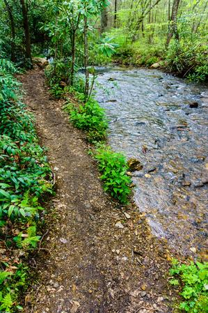 Avery Creek trail and stream.