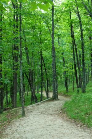 Stone Mountain Trail near Summit