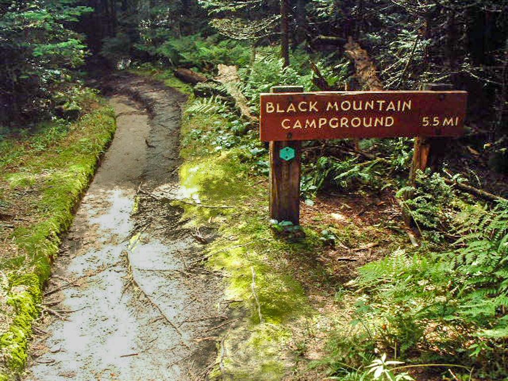 Hiking In Mount Mitchell State Park North Carolina