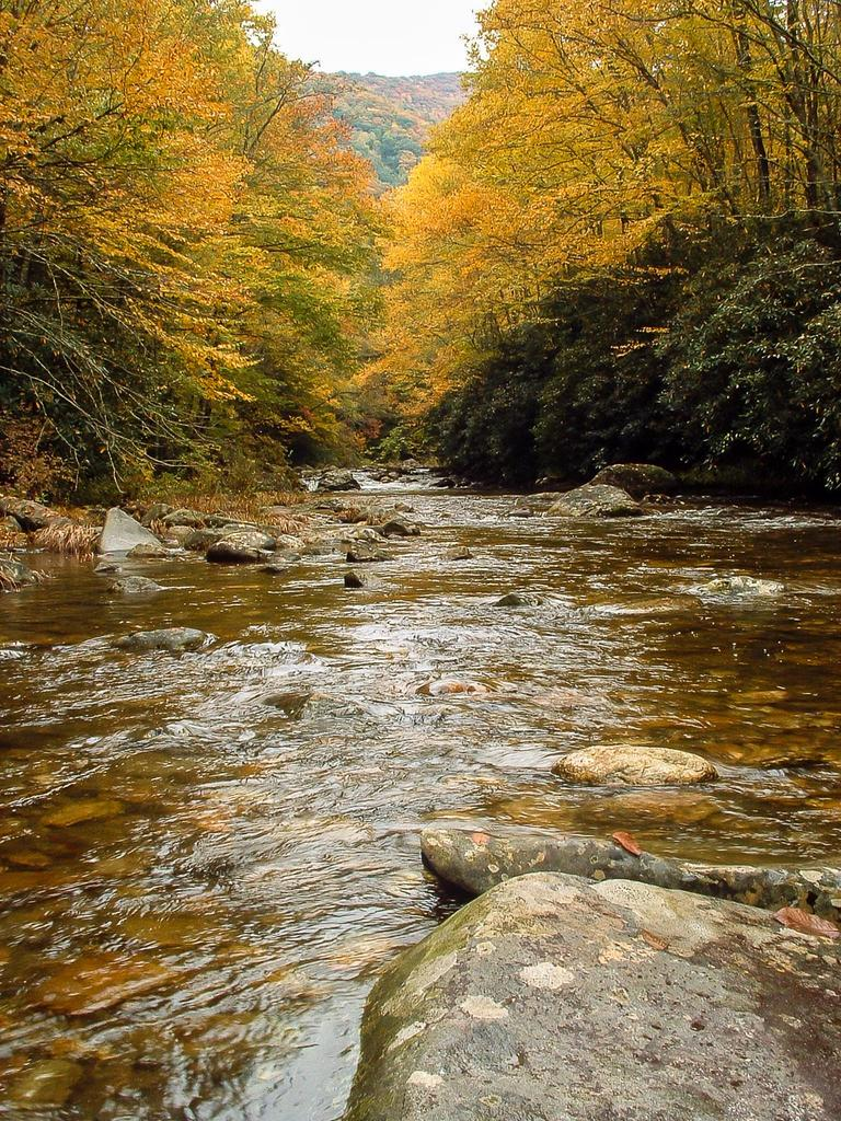Shining Rock Wilderness Area - Pisgah National Forest
