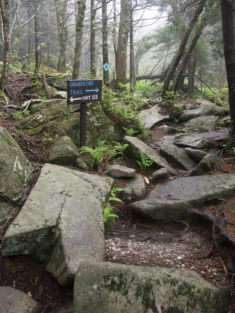 Grandfather\'s Profile Hike in Grandfather Mountain State ...