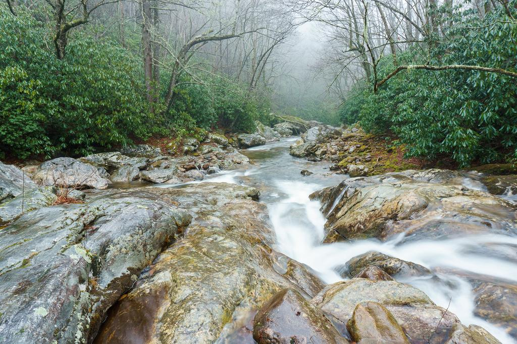 confluence of east fork and greasy cove prong shining rock wilderness area   pisgah national forest  rh   hikewnc info