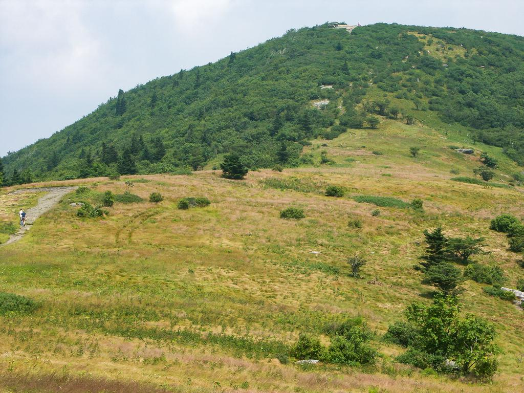The Appalachian Trail climbs Jane Bald.