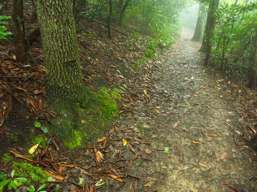 Hiking north carolina 39 s mountains to sea trail for Nc hunt and fish