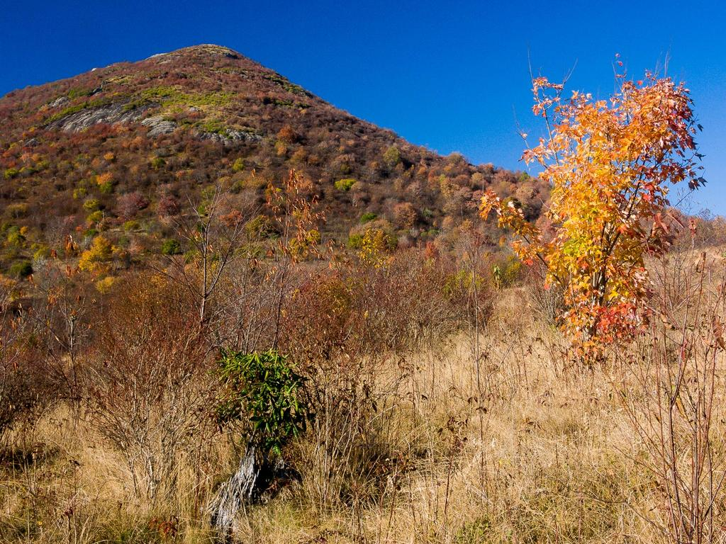 Sam Knob rises above the meadows near Flat Laurel Creek in autumn.