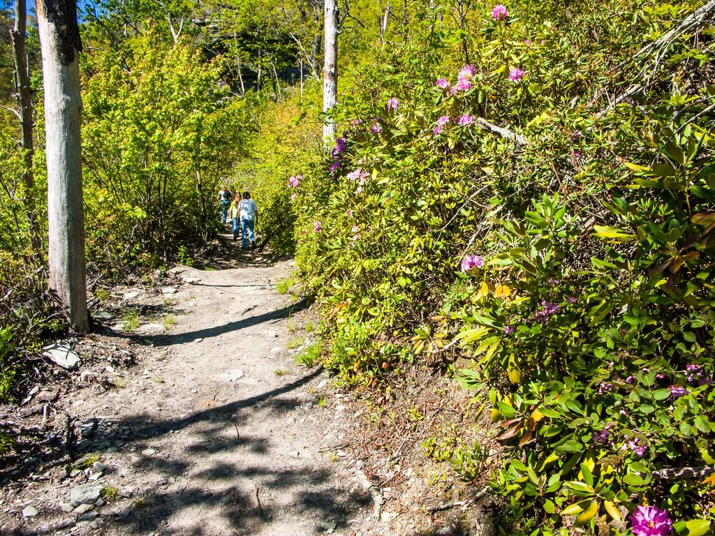 Trail and Rhododendron
