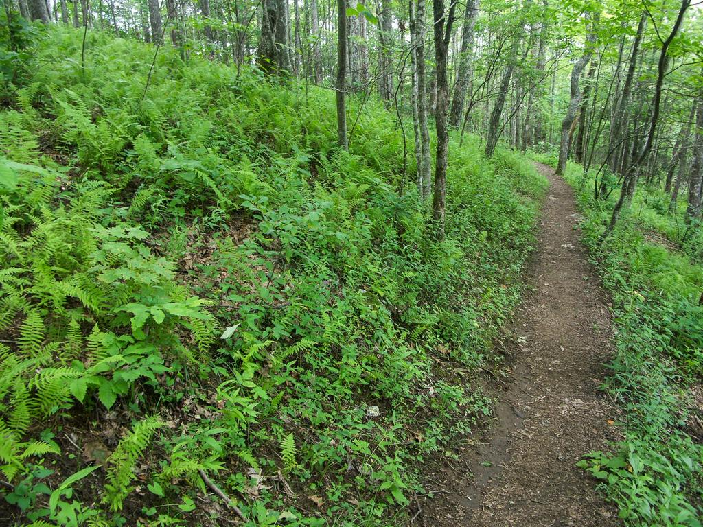 Appalachian Trail through Open Woods