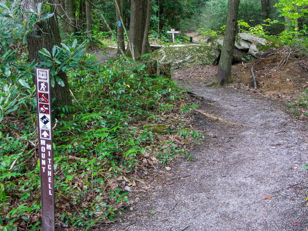 Mount Mitchell Trail Start