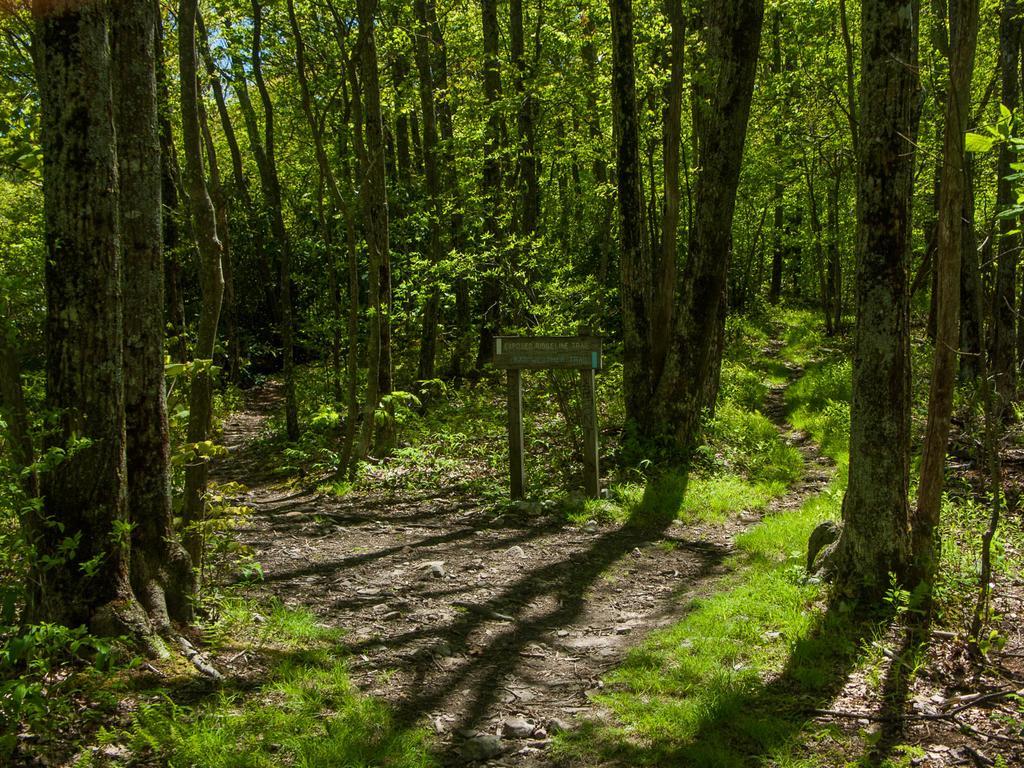 The Appalachian Trail split north of Big Firescald Knob, marking the far end of this hike.