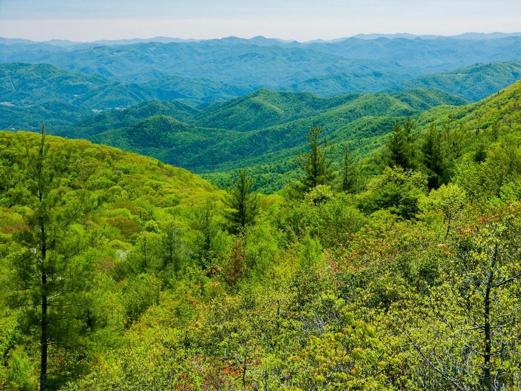 View into North Carolina from the ridge near Big Firescald Knob