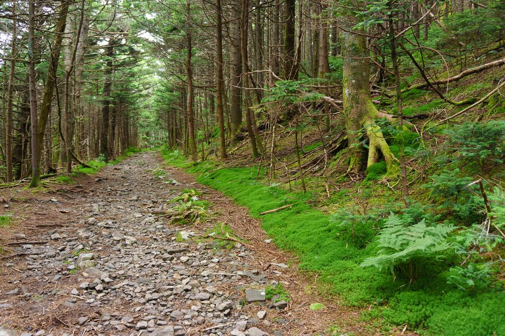 The Appalachian Trail heading southwest from Carver's Gap, or northeast from the Cloudland Hotel site, goes around Roan High Knob through this beautiful forest of spruce and fir.
