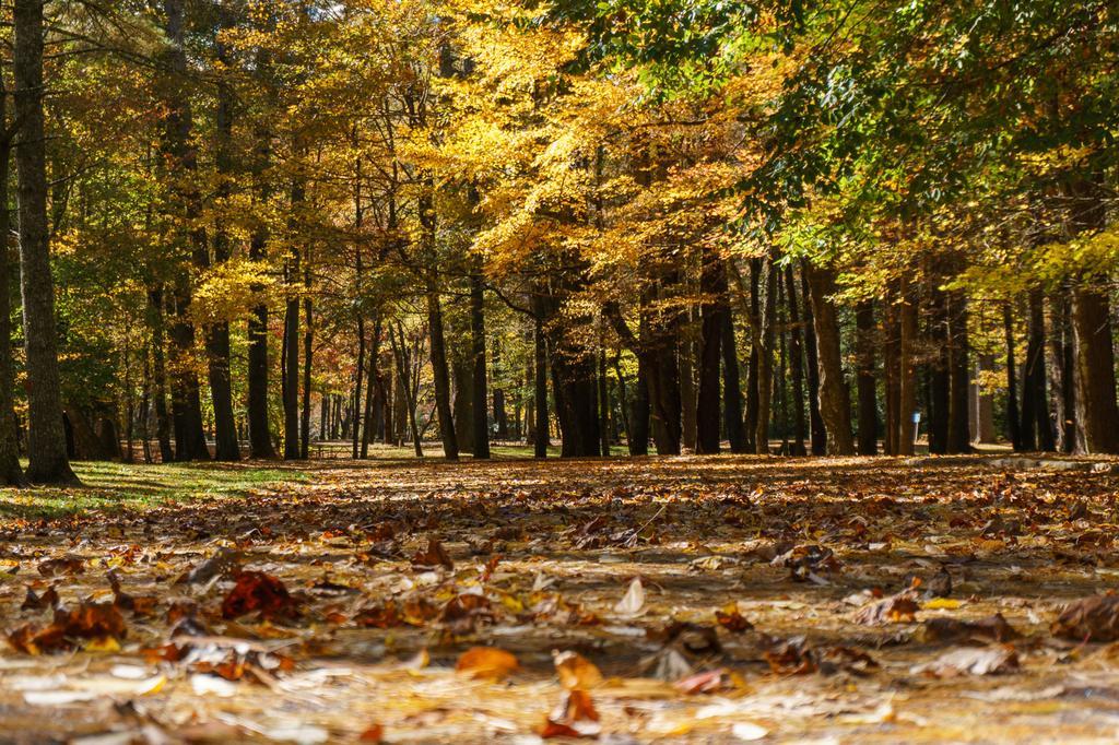 Fall color in the Linville Falls picnic area