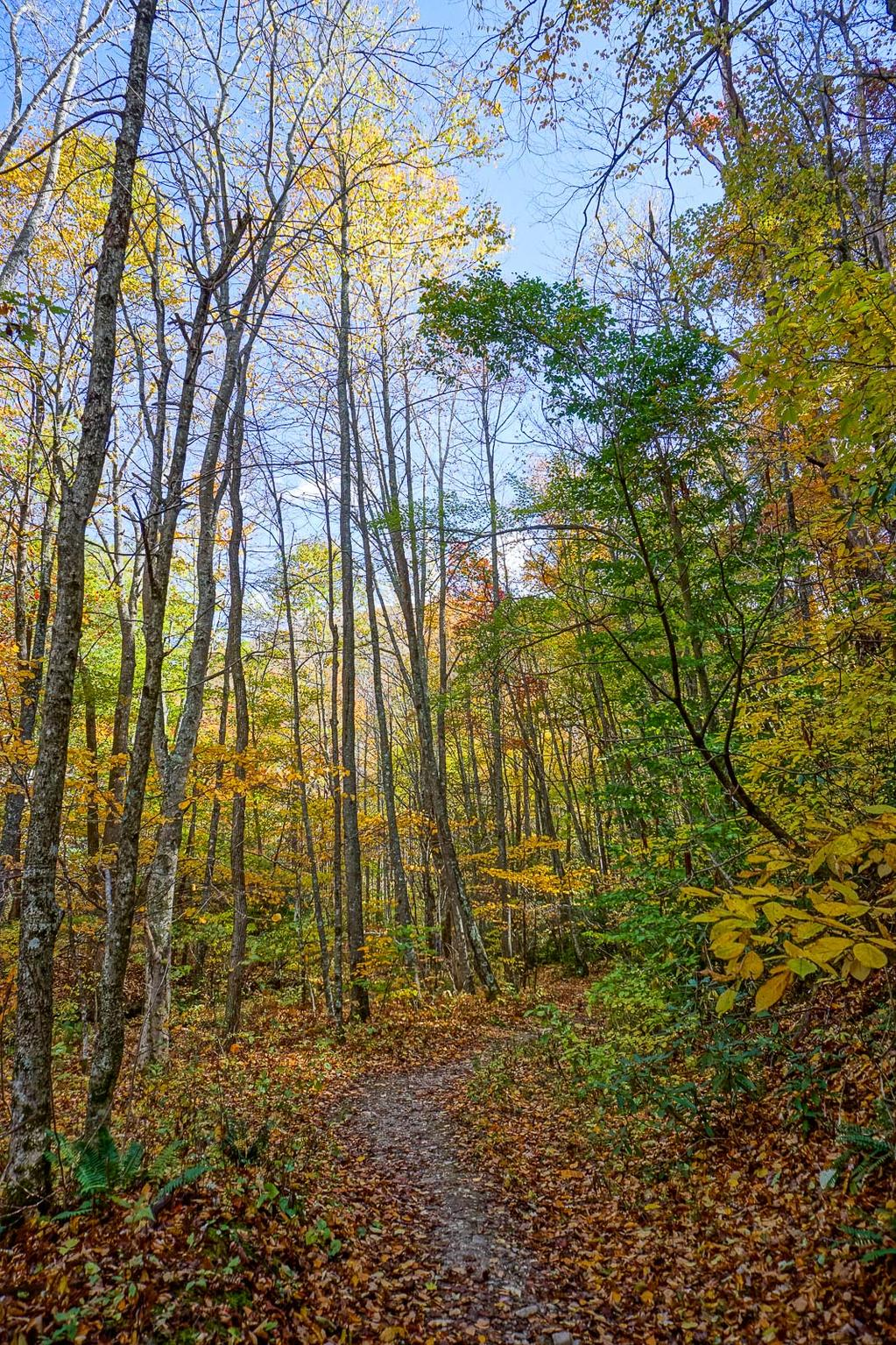 The final trail to the falls in autumn.