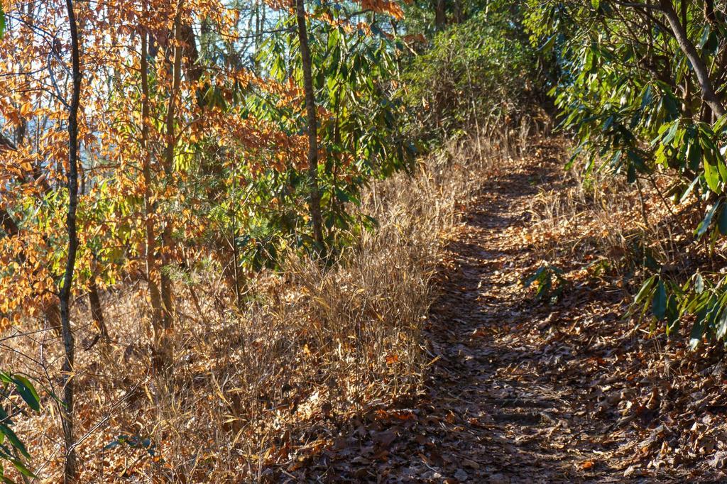 Sycamore Cove Trail Grasses