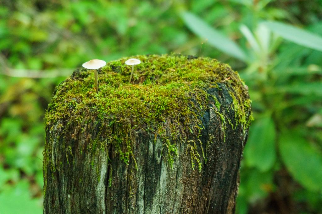Current inspiration: With all the rain we've had lately, moss and fungi are having their best season yet!