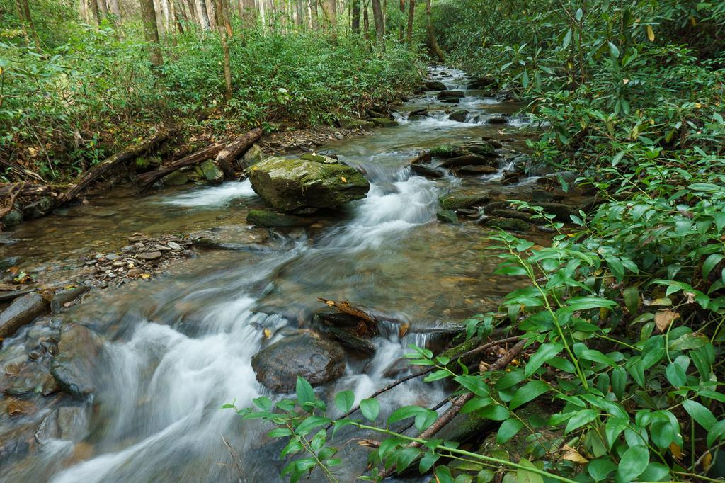 Current inspiration: With all the rain we've had lately, even small streams such as Hickory Branch gush!