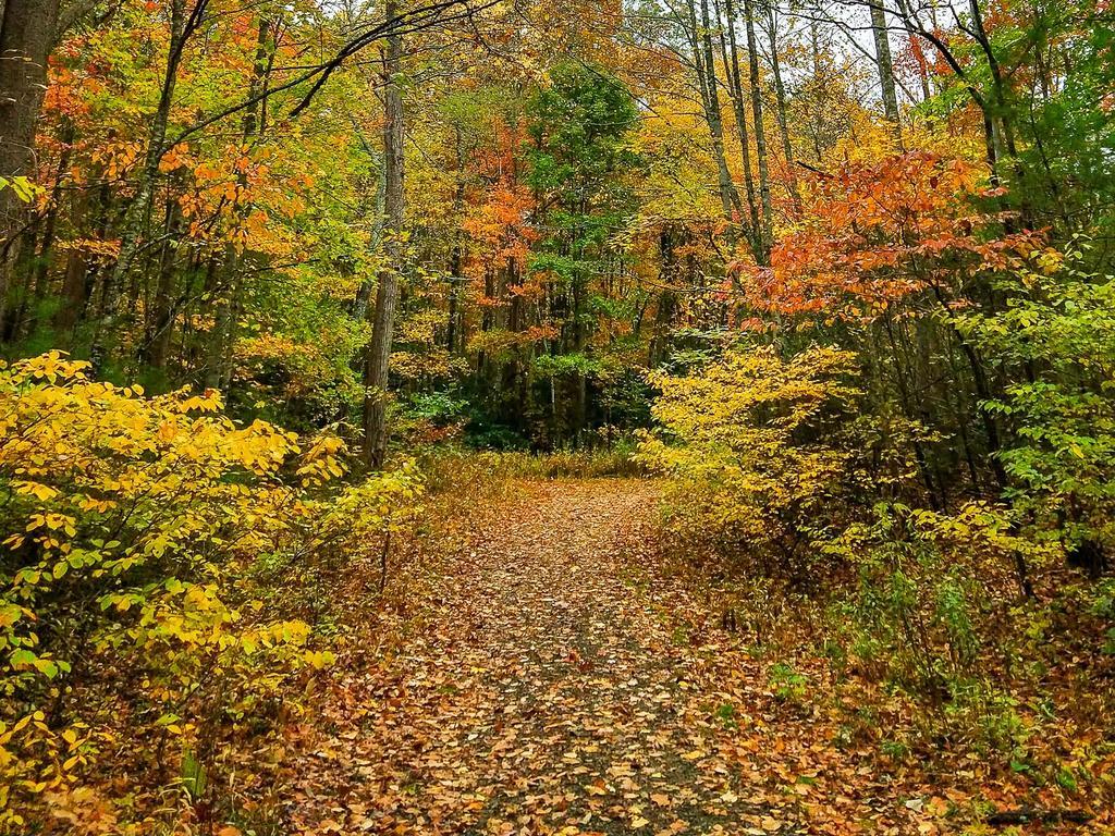 Current inspiration: Autumn color at Shope Creek, 10/26/2019.