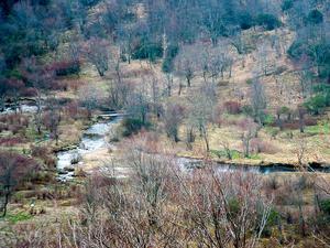 Graveyard Fields from Graveyard Ridge