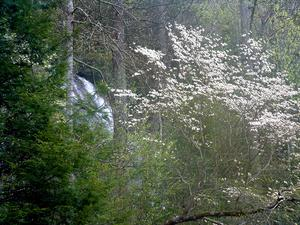 Daniel Ridge Falls - With Dogwood