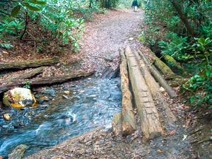 Log Bridge on the Daniel Ridge Trail