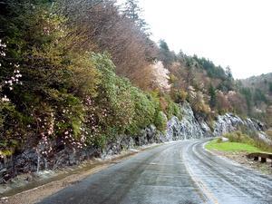 Pinkshell Azalea and Waterfalls