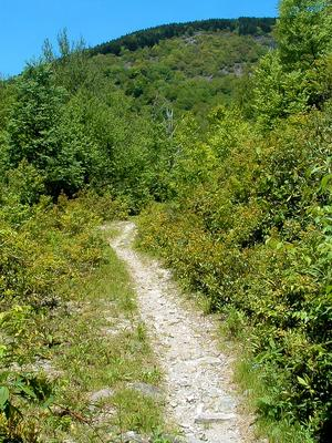 Flat Laurel Creek Trail and Little Sam Knob