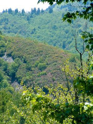 Rhododendron Ridge