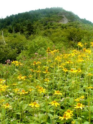 Wildflowers and  Potato Knob