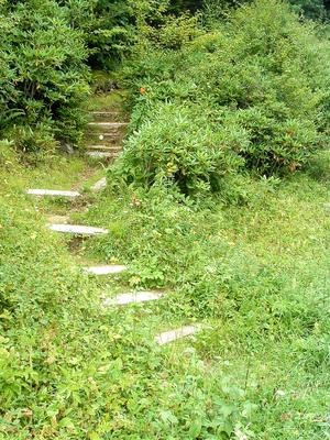 Steps on Mountains to Sea Trail at NC 128