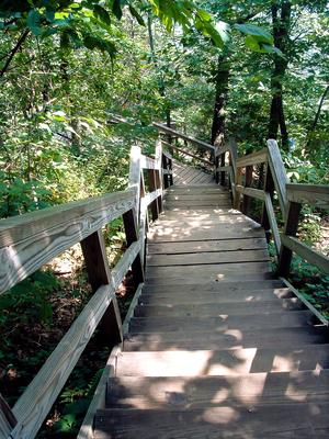 Wooden Stairs on the Skyline Trail