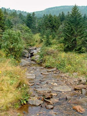 Lower Creek at Camp Alice