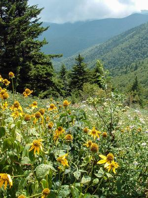 Wildflowers and View from Mount Mitchell