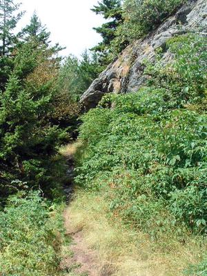 Rock Outcrop on the Mount Mitchell Trail.